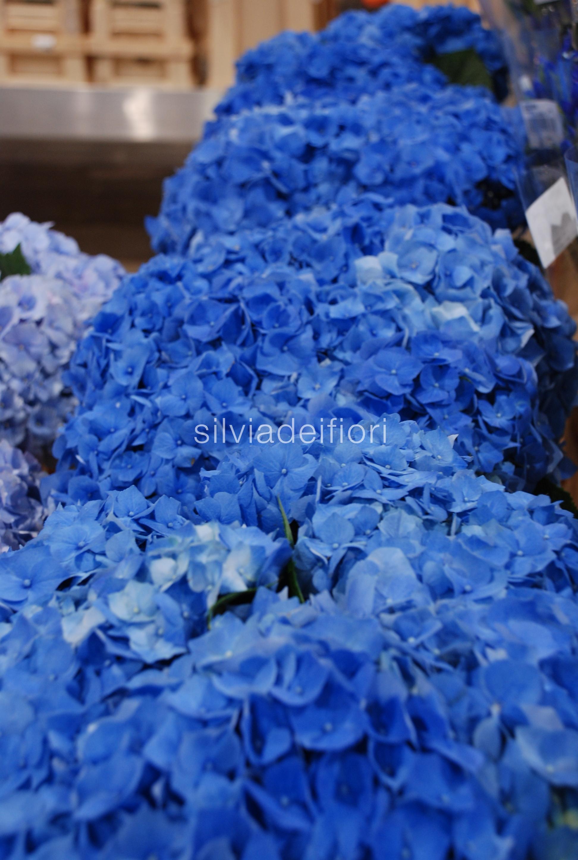 Addobbi Floreali Matrimonio Azzurro : Fiori blu silviadeifiori