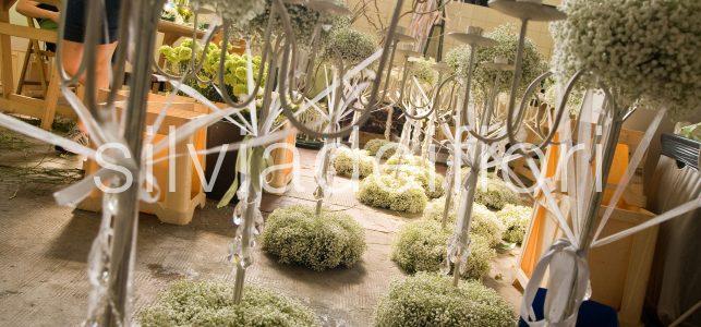 gypsophila nozze