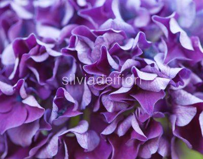 fiori viola e lilla per matrimonio