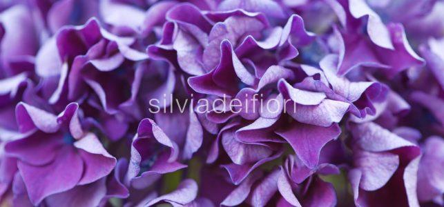 Matrimonio In Lilla : Fiori viola silviadeifiori