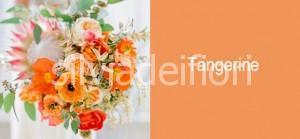 Color pesca matrimonio Tangerine