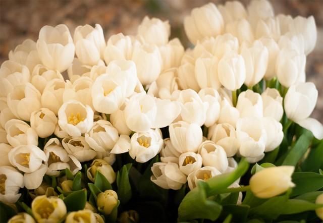 tulipani per allestimento chiesa