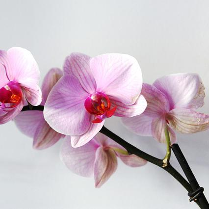 orchidea fiori matrimonio