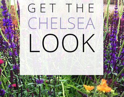 chelsea flower show londra